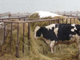 square-hay-feeder